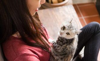 021821 japan pet food market lead srcleungcho