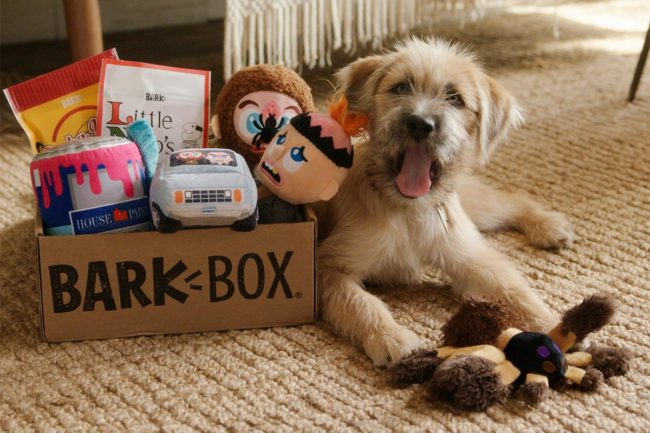 Northern Star shares preliminary Barkbox Q3 results