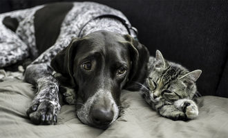 032221 pfma pet population data lead