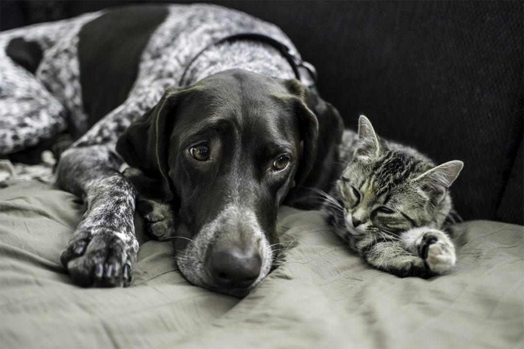 PFMA shares latest pet population data for the United Kingdom