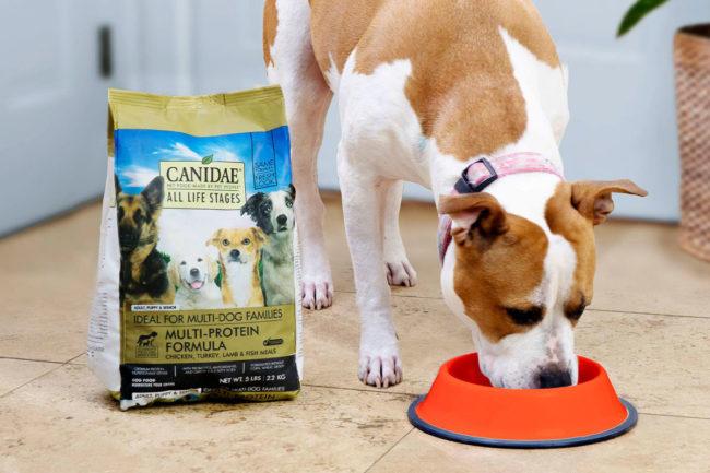 Canidae expands senior leadership team