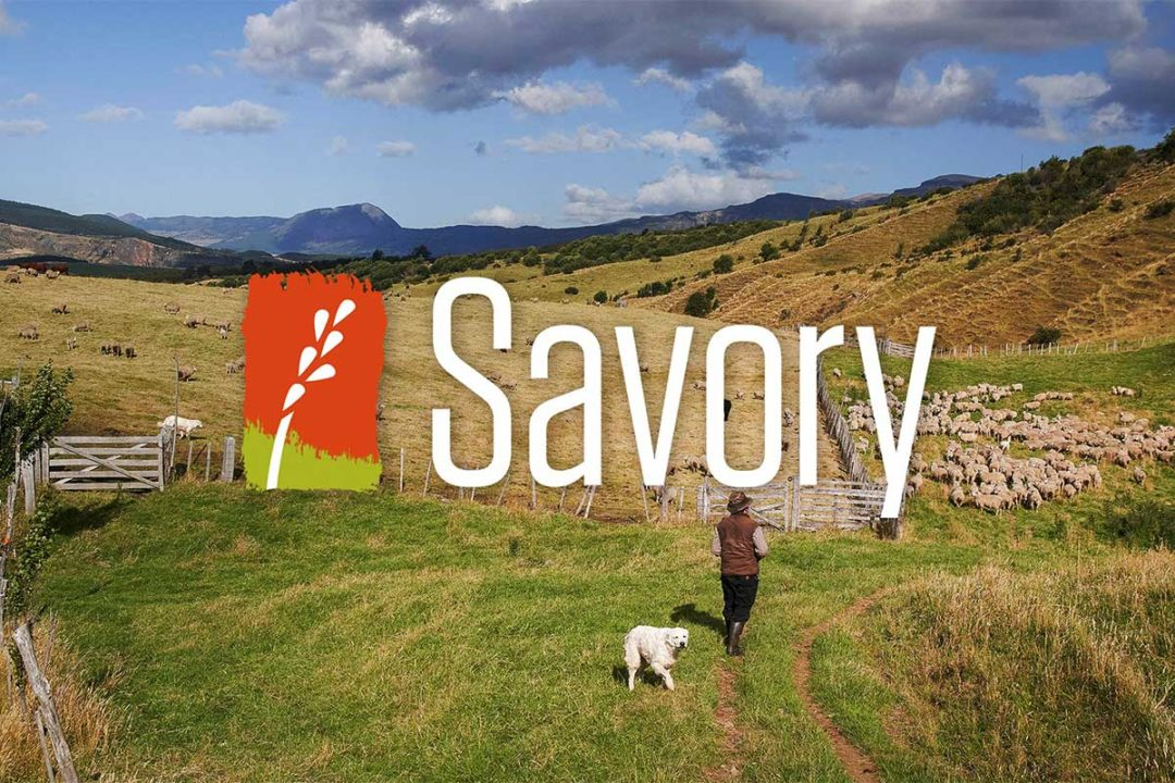 Spot Farms partners with Savory Institute
