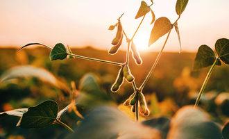051321 adm soybean plant lead src.bobex73