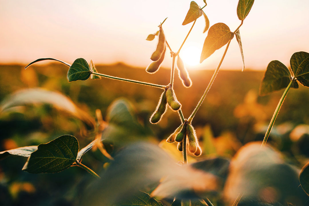 ADM to build first soybean processing facility of its kind in North Dakota