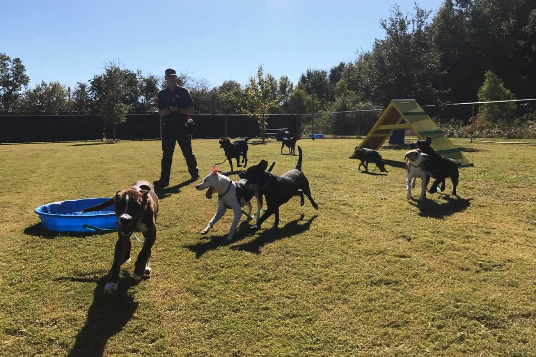 Cloud Star donates dog food to Dogs Play for Life