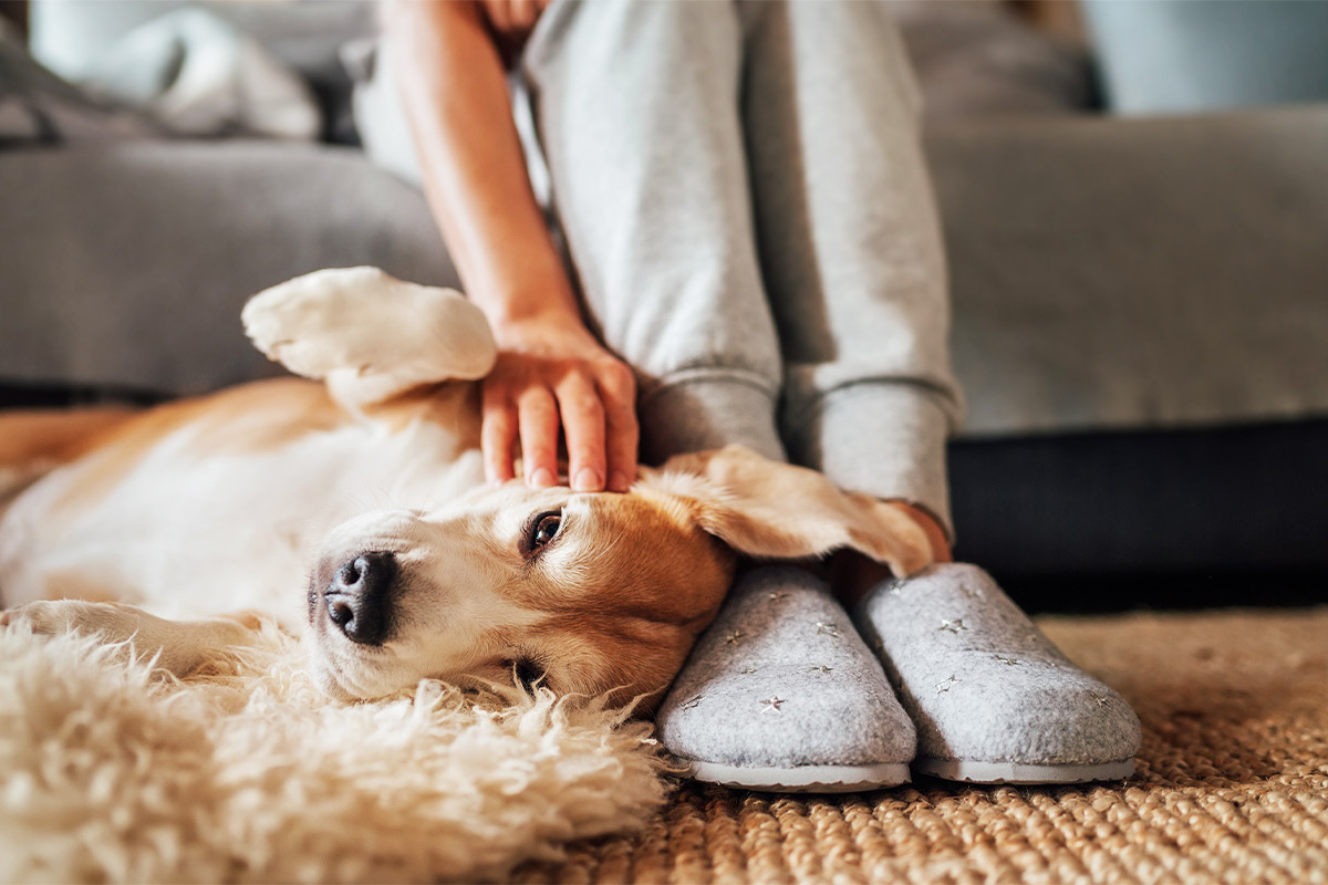 Pet owners becoming more involved in pet health, wellness amid COVID-19 lockdowns
