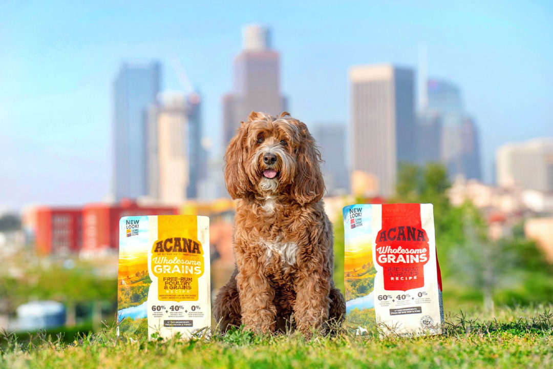Champion reports success in partnering with pet-owning influencers on social media