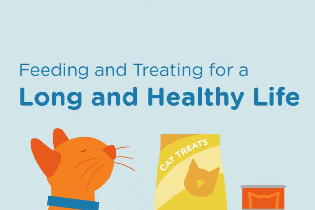 Feeding tips and treating practices for pet owners