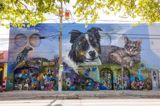 Chewy commissions pet murals and donates to shelters to celebrate 10th anniversary