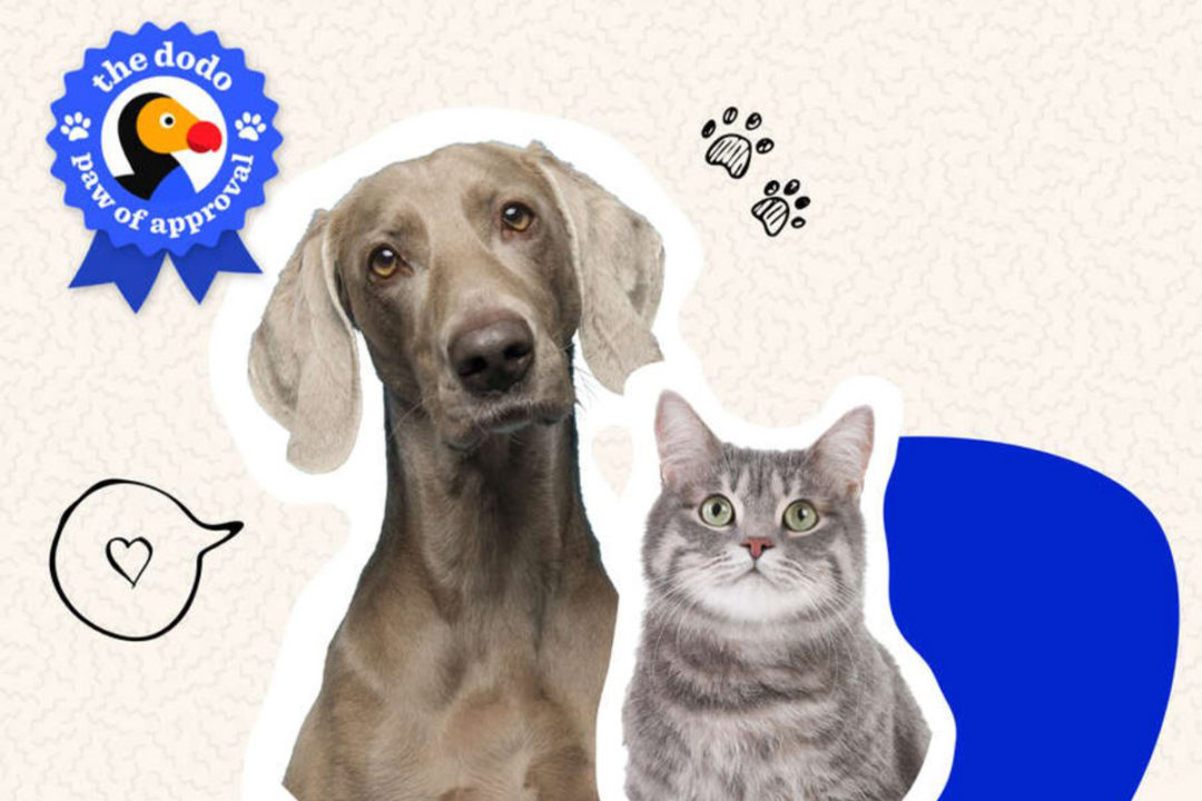 The Dodo introduces list of pet owner and pet-approved products