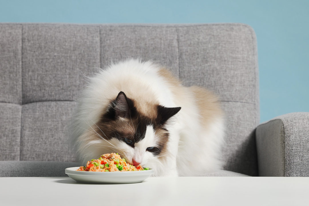 JustKitchen rolls out fresh, delivery-only dog and cat foods to pet owners in Taiwan