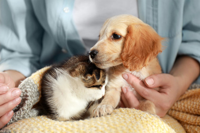 APPA releases key findings from 2021-2022 National Pet Owners Survey