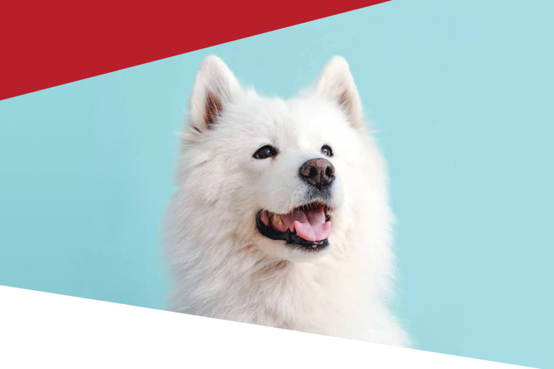 FEDIAF releases pet ownership, pet food manufacturing data and trend report for 2020