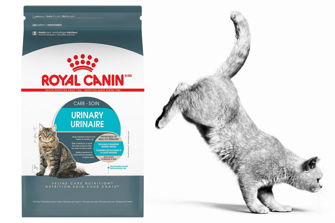 Royal Canin releases new urinary health diet for cats