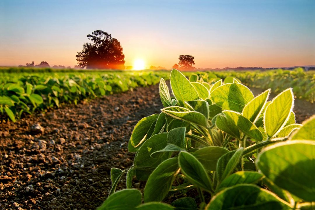 Corbion partners with Truterra to support sustainable soybean farming
