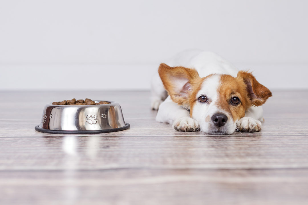 Antioxidants preserve the quality of pet foods and treats and help prevent products from becoming rancid.