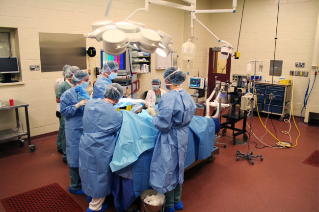 Royal Canin funds minimally invasive surgery education and research at Montreal university