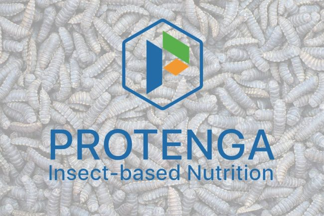 Protenga raises $1.6 million to develop insect protein production for pet food