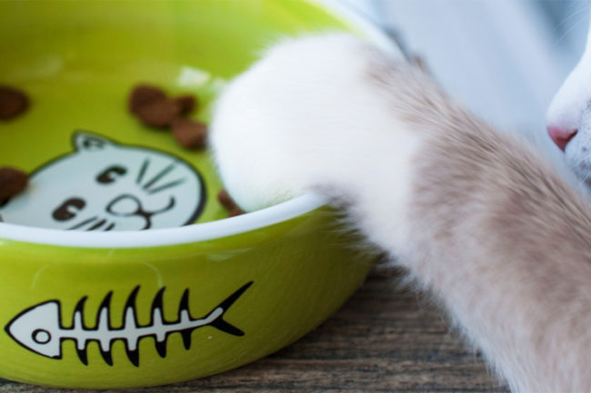 Feline eating habits shared by US cat owners
