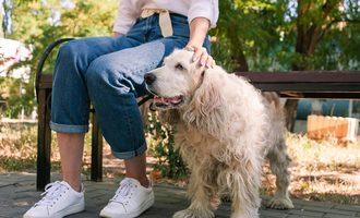 081221 pf pet ownership lead src.leonid