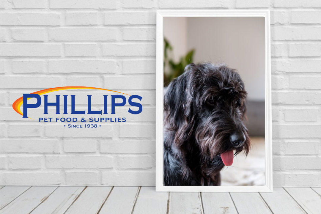 Major pet industry distributors Phillips and ASC call off merger