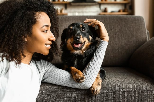 Dog ownership on the rise in the United States