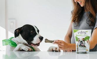 083120 v dog repurpose lead