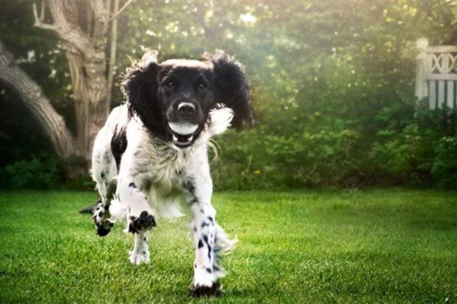 Chr. Hansen launches probiotic ingredients for pet food, supplements