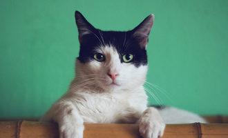 091621 petdine cat supps lead