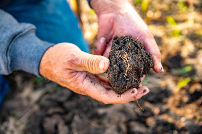 Cargill launches RegenConnect regenerative agriculture program for farmers