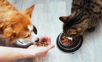 091820 top 5 pet food trends pf lead