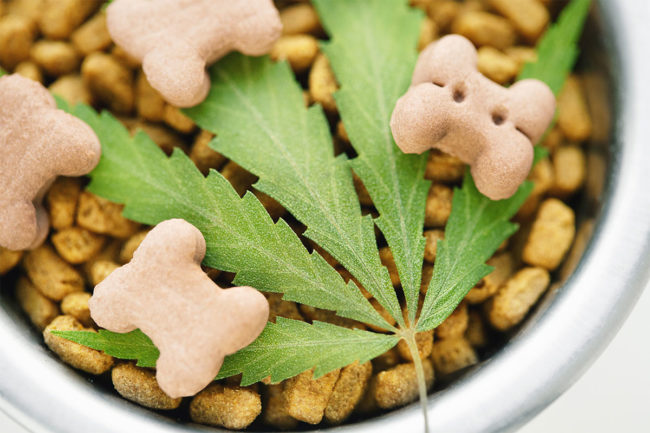 AAFCO urges industry stakeholders to pursue hemp ingredient research for animal food