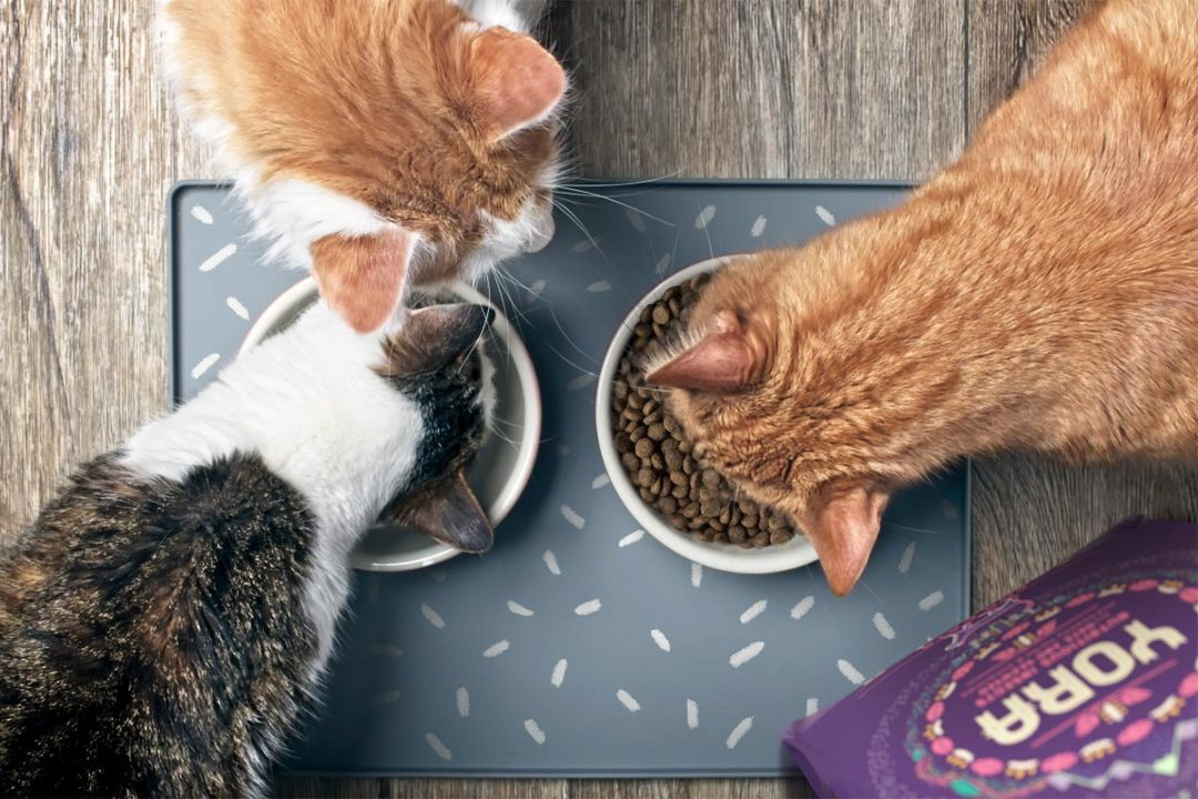 Yora Pet Foods introduces new insect-based cat food formula