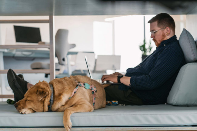 BARK survey reveales dog owners are reluctant to go back to the office without their canine companions