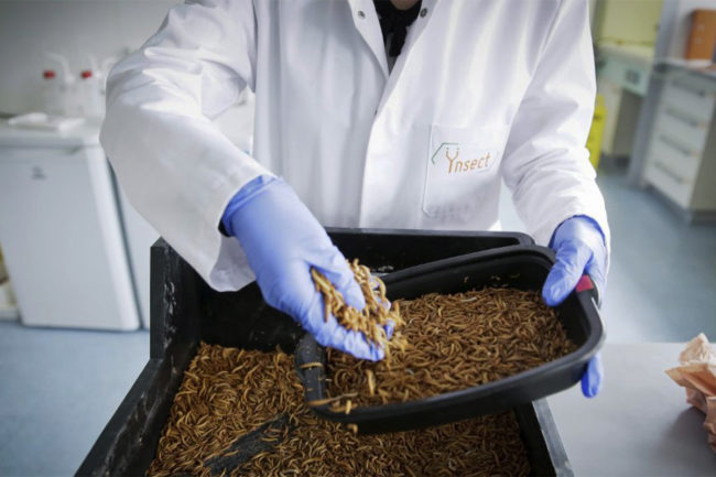 Ynsect, a French insect processor, has secured $372 million in additional funding