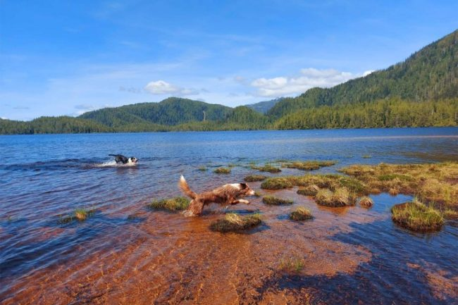 Pet specialty retailer in Vancouver Island acquired by Dane Creek Capital and United Raw Pet Food