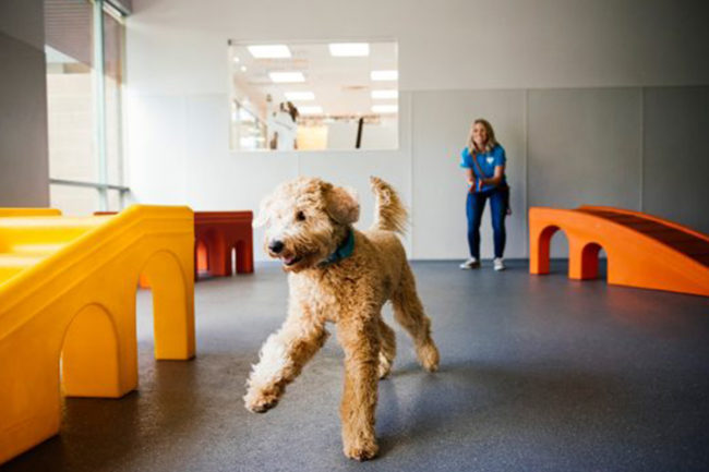 NutriSource, Dogtopia team up to offer NutriSource food and treats at dog daycare facilities