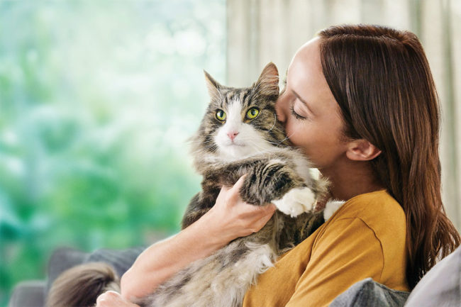 Cat food has historically been second class to the dominant dog food market, but some brands are stepping up to offer more and better nutritional products for cats. (Photo courtesy of Nestlé Purina PetCare)