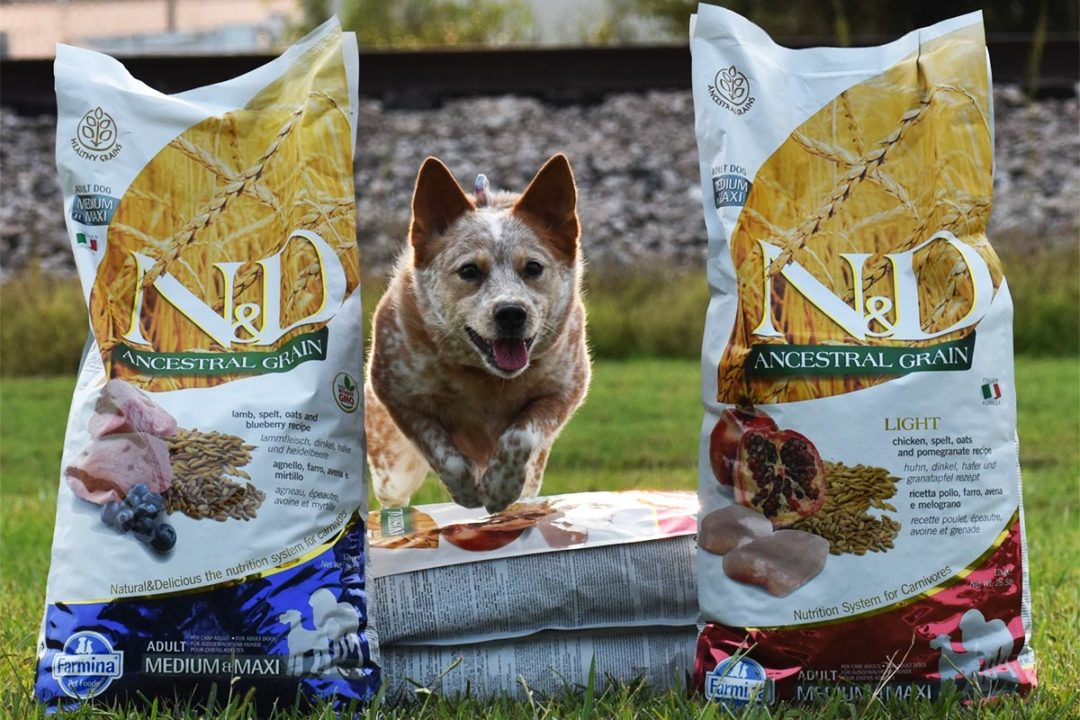 Italy-based Farmina Pet Food establishes US headquarters in Reidsville, N.C.