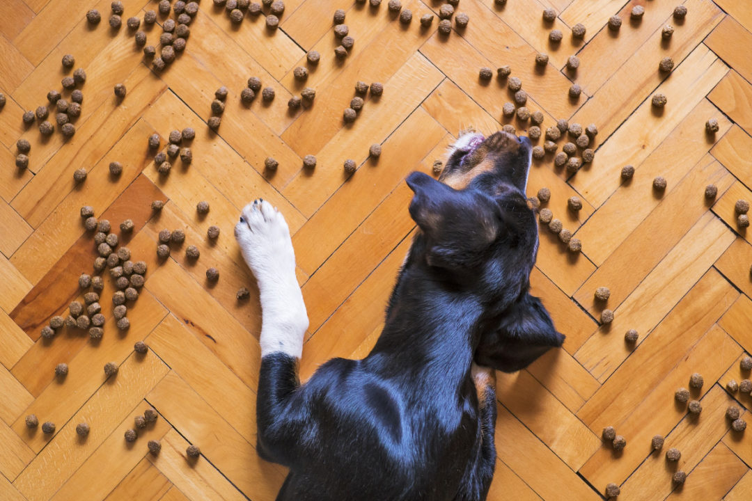 New pet food and treat products launched in 2020
