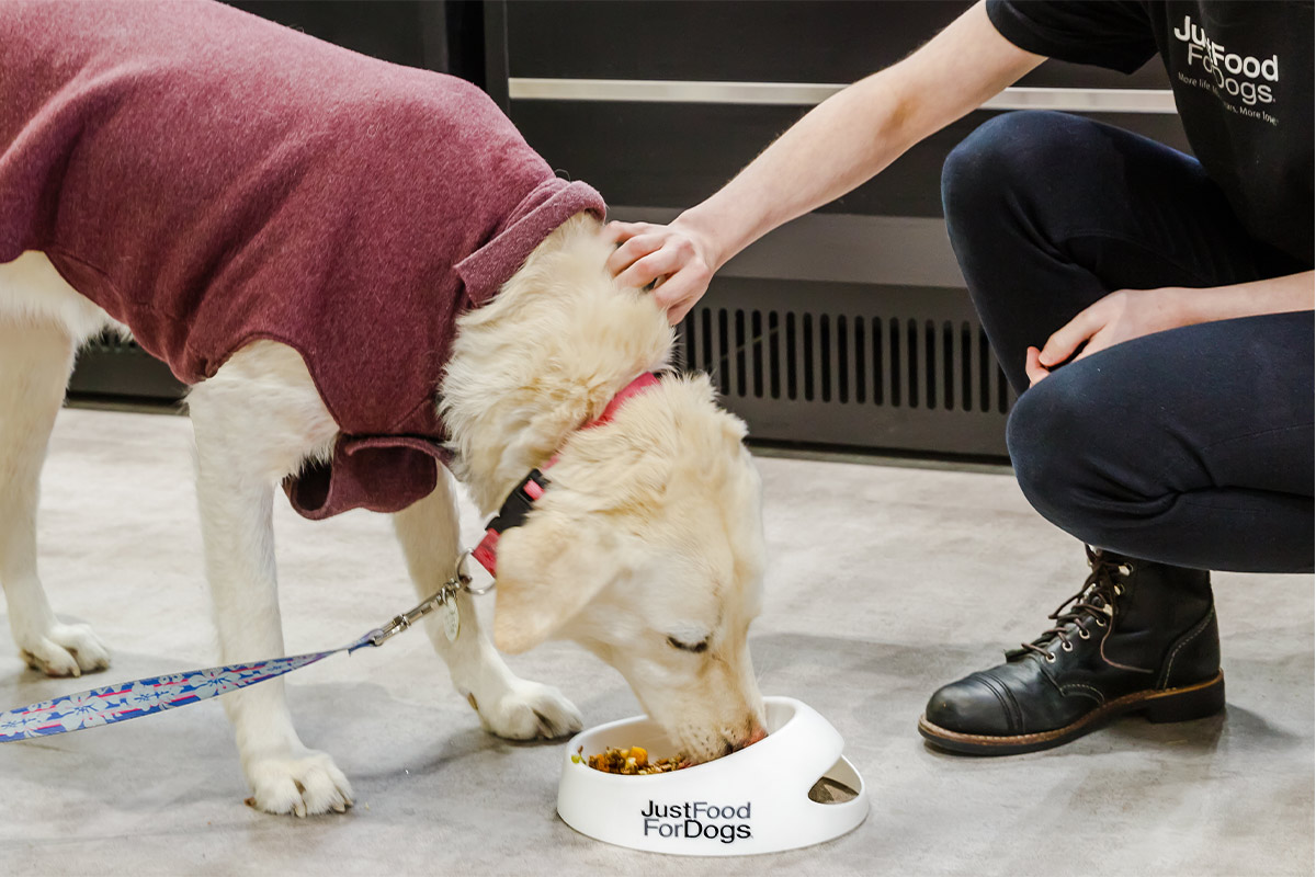 $1 million given to JustFoodForDogs to fund and conduct nutrition research