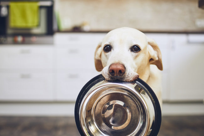 Separating fact from fiction among pet food ingredient trends and preconceptions
