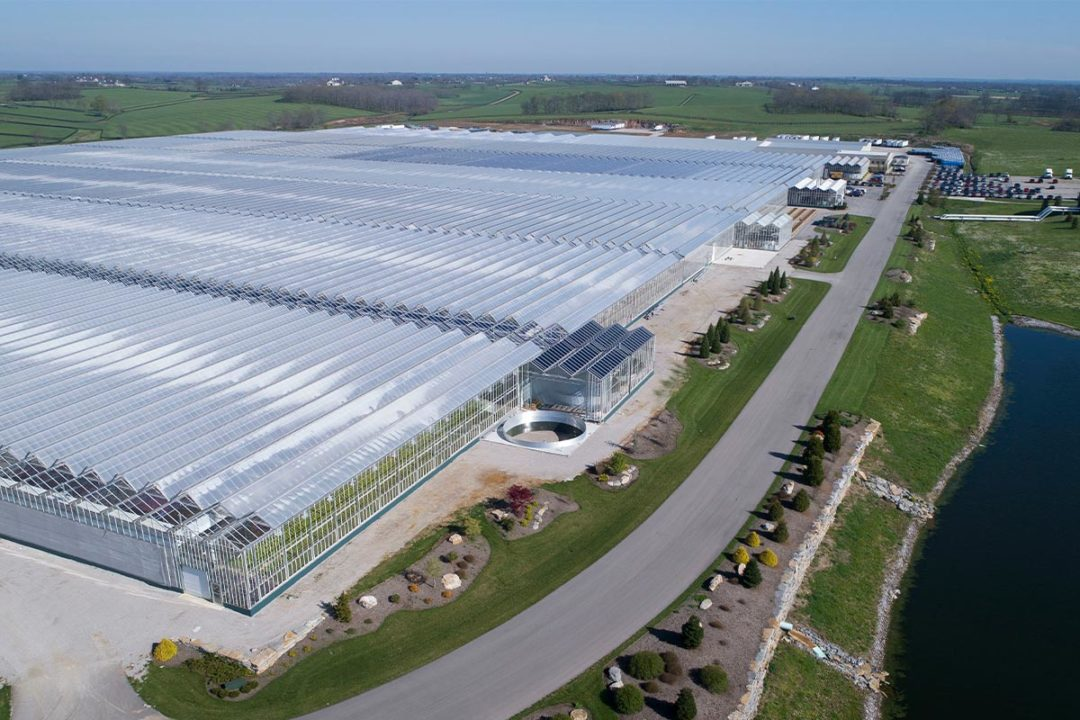 1.8 million-sq.-ft. hemp greenhouse in Paris, KY