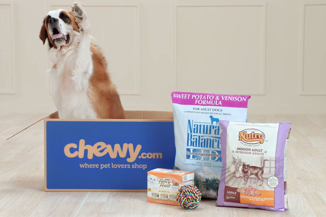 Dog inside Chewy box next to pet food products