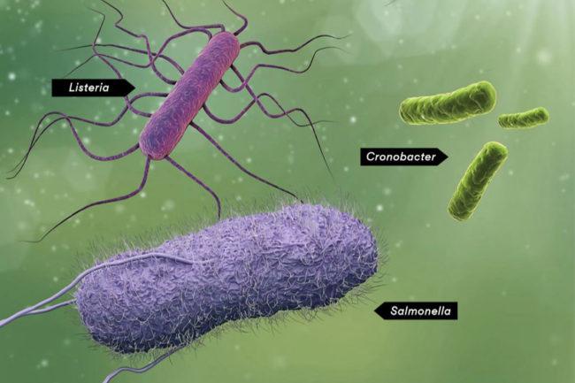 Illustration of food-borne pathogens Salmonella, Listeria and Cronobacter