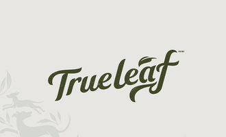 062019_true-leaf-fujimoto_lead