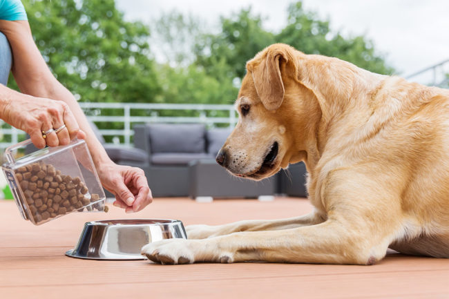 Woman serving dry kibble to large dog (©STOCKR - STOCK.ADOBE.COM)