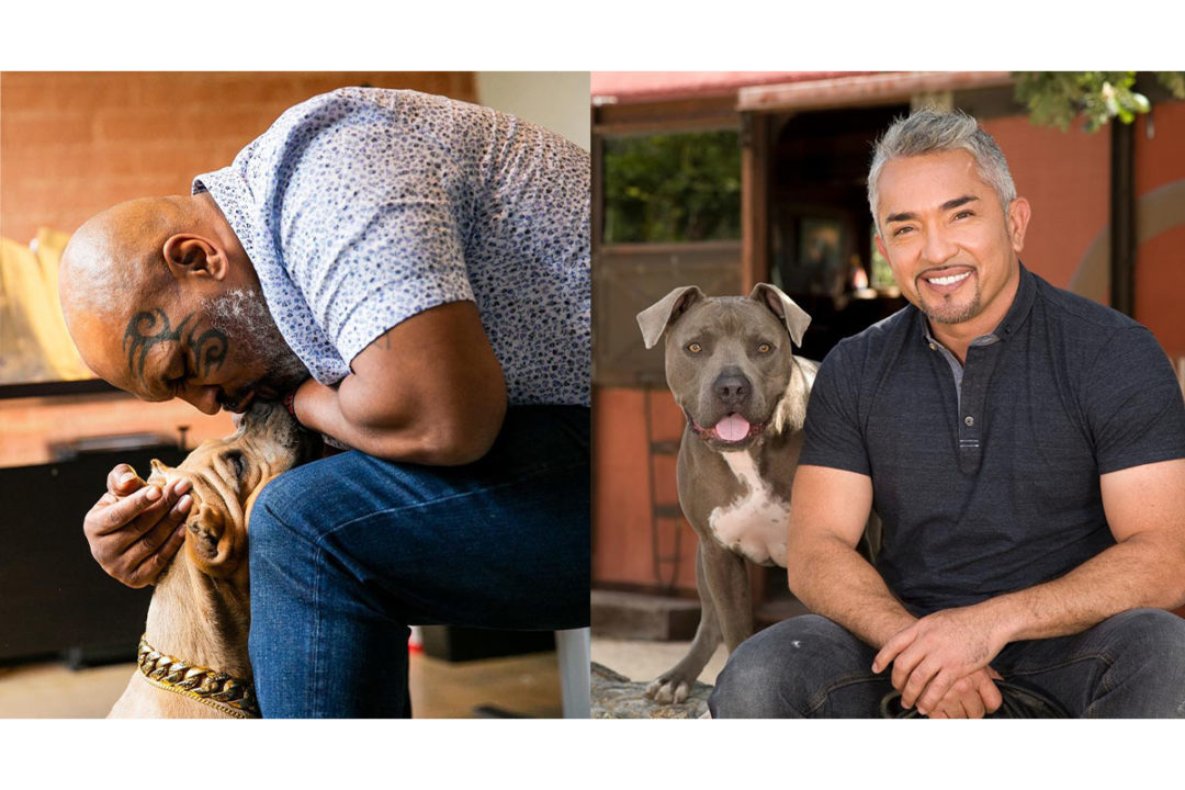 Mike Tyson and Cesar Millan with dogs