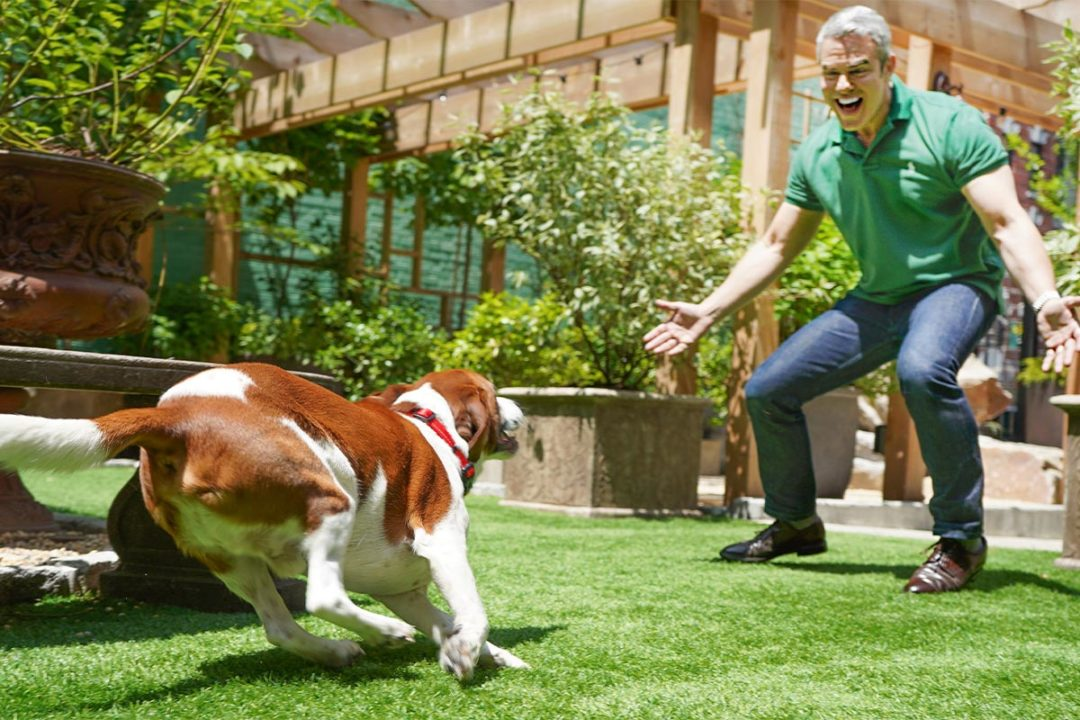 Purina surveys pet owners with senior dogs