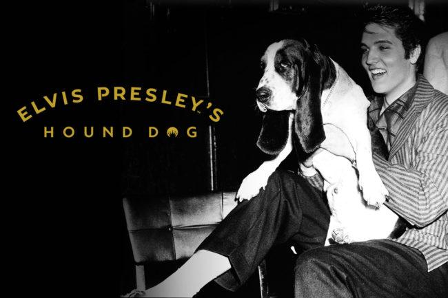 Elvis Presley inspires line of CBD dog treats